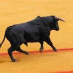 Visitas culturales por España